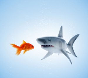 sharkeatgoldfish 300x267 Biotech Firms in a Heap of Trouble