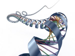 thyroidgenesahead1mile 300x225 Gene Link to Thyroid Cancer