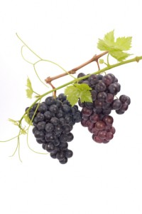 lifesavers 200x300 Resveratrol: Is the Honeymoon Over?
